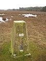 Trig pillar on Longcross Plain, New Forest - geograph.org.uk - 108892.jpg
