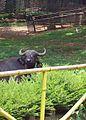 Trivandrum zoo kerala.jpg