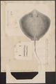 Trygon uarnak - 1700-1880 - Print - Iconographia Zoologica - Special Collections University of Amsterdam - UBA01 IZ14200083.tif