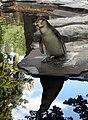 Tučňák.jpg