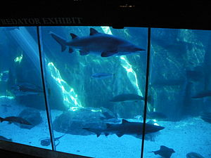 Shark Cage Tours Guadalupe