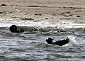 U.S. Sailors complete a swim in frigid waters in Chesapeake Bay during a Special Warfare Combatant-craft Crewmen training exercise near Virginia Beach, Va., Feb. 4, 2010 100204-N-BA263-006.jpg