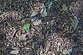UIUC Arboretum 20070922 img 1702.jpg