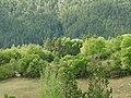 Upper Tarn Vista N106 Ispagnac 6303.JPG