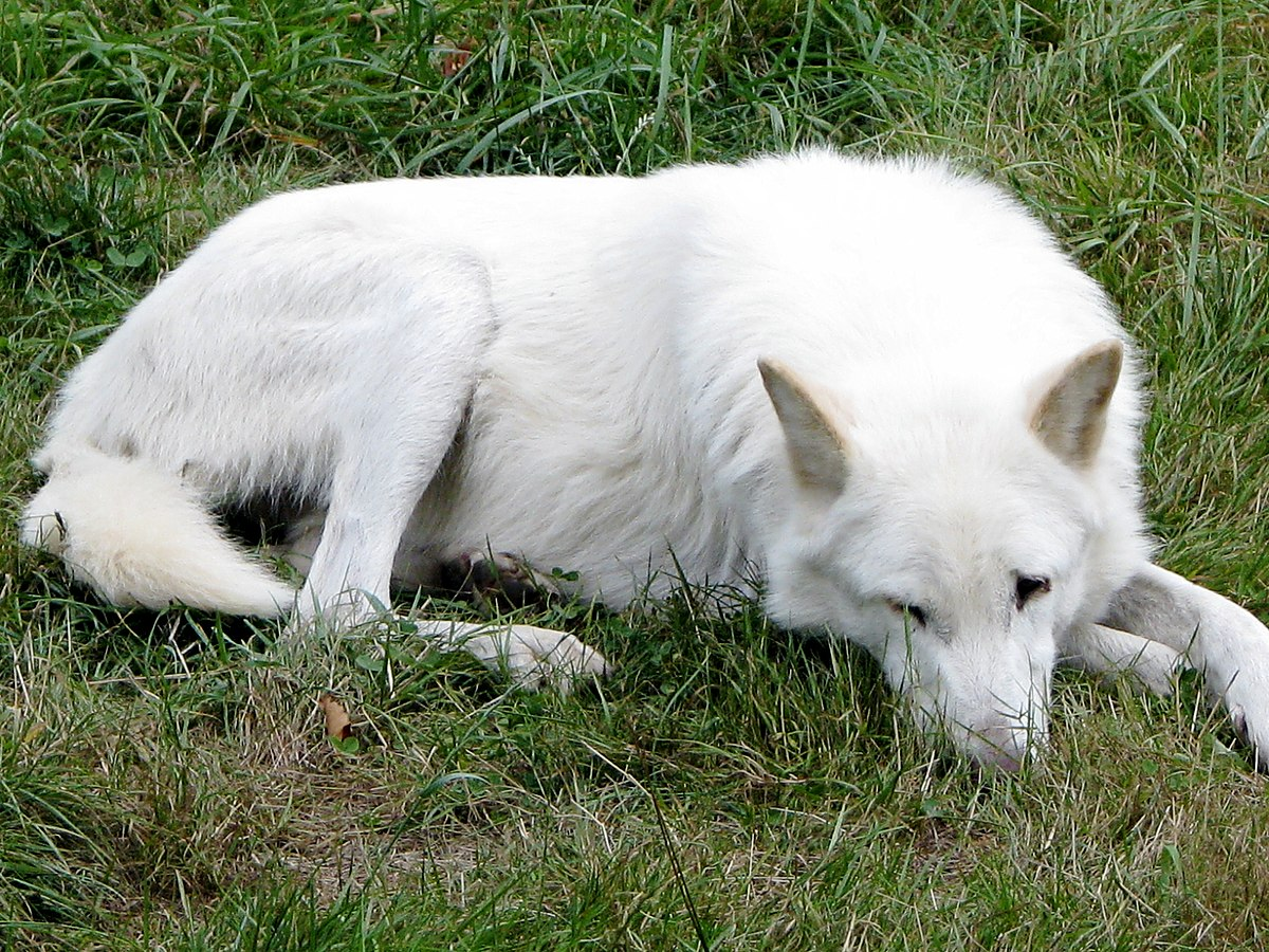 Small Female Dog Fucked Hard With Bbc