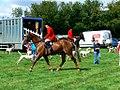 Vale of White Horse Hunt, Cricklade Show 2010.jpg