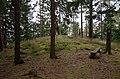 Vargarda galgbacken sep 2012.jpg