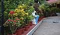 Various flowers 1.jpg