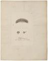 Vaucheria fontinalis - voortplanting - Alg - 1700-1880 - Print - Iconographia Zoologica - Special Collections University of Amsterdam - UBA01 IZ19600129.tif