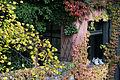 Vienna - Hundertwasser housing complex - 0436.jpg
