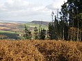 View over bracken in Cowhouse Bank Wood - geograph.org.uk - 603629.jpg