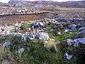 Village of Strome - geograph.org.uk - 727372.jpg