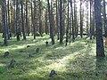 Vormsi kalmistu 03.jpg