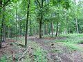Waldarbeiten - panoramio.jpg