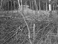 Waldverhaue mit Stacheldrahthindernissen - CH-BAR - 3236585.tif