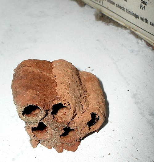 File wasp nest red soil wikimedia commons for Uses of soil wikipedia