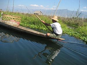 Image:Water hyacinth Inle Lake