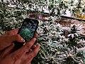 Weed tourist photographs plants.jpg