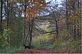 Wendover woods in Autumn - geograph.org.uk - 652218.jpg