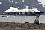 Whalers Bay Deception Island Antarctica Fur Seal Silversea Silver Cloud (47284679042).jpg