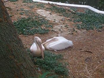White- bird.jpg