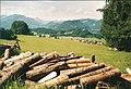 Wiese bei Schoellang - geo.hlipp.de - 1300.jpg