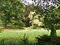 Wilcox Park (pond) - Westerly, RI.JPG