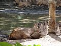 Wild life at zoo 16.jpg