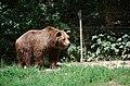 Wildpark Besuch, 2015 (19563154050).jpg