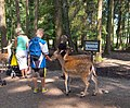 Wildpark Poing 3.jpg