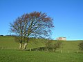 Wind-shaped Trees - geograph.org.uk - 286074.jpg