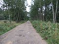 Woodland Track - geograph.org.uk - 214489.jpg