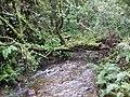 Woodland stream near North Darley - geograph.org.uk - 530648.jpg
