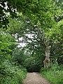Woodland track, Wolstonbury Hill - geograph.org.uk - 201501.jpg