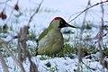 Woodpecker - December 2009 (4200383459).jpg