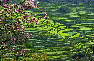 Wuyuan County, Jiangxi - Wuyuan Huangling Tourism Resort