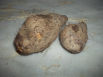 Yam (vegetable) - Water yam (D. alata)