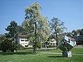 Zollikon OescherB April 2007a.JPG