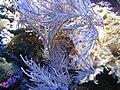 Zoo2007 img 5887.jpg