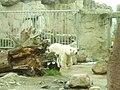 Zoo am Meer 2008 PD 15.JPG