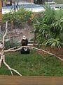 """""""DT"""" the Bald Eagle (31002021303).jpg"""
