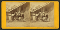 (Horse named) Planet, from Robert N. Dennis collection of stereoscopic views.png