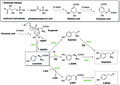 (S)-Norcoclaurine Biosynthesis.tif