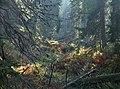 Údolí Bílé Opavy (Weiße Oppa) - by Pudelek.jpg