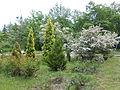 Ботанічний сад ДНУ 17.JPG