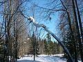 Быковка.Зима - panoramio.jpg
