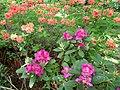 Квіти на Клочківська52.jpg