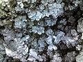 Кристаллы изморози на листьях.jpg