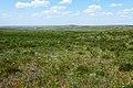 Майские травы в степи - panoramio.jpg