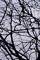 Осіннє дерево в Хрещатому парці.JPG